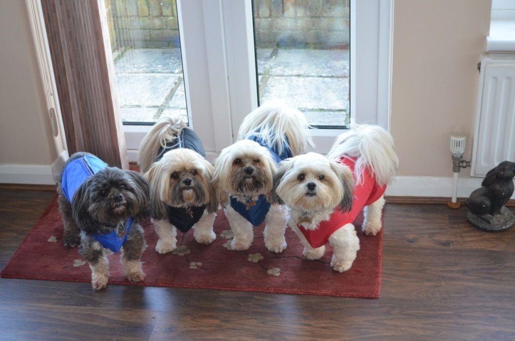 bob-step-in-dog-coats.jpg