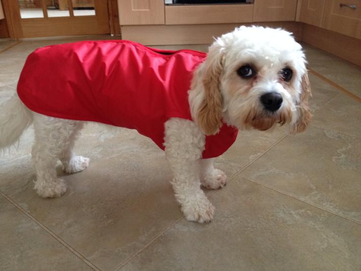 daisyunlinedstepindogcoat.jpg
